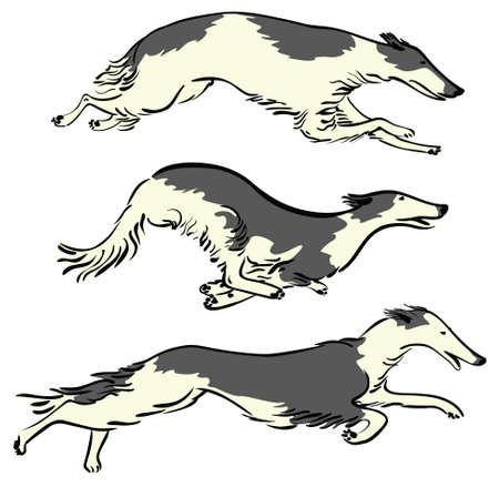 borzoi: Set with running Russian Borzoi Dogs, working dogs Illustration