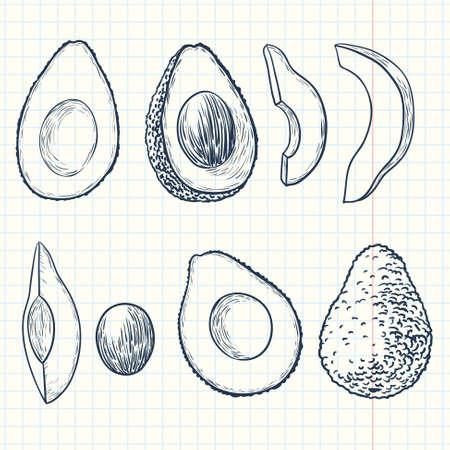 avocado: Doodle avocado set Illustration