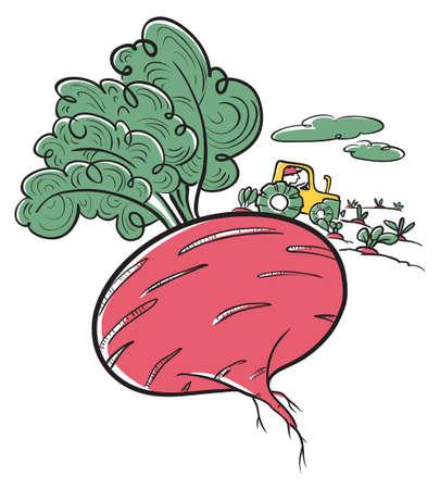 Farm Illustration. Nette doodle Rübe und Bauer