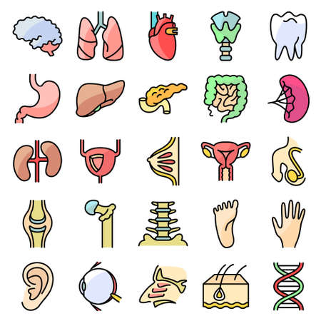 oido: Vector colorido delgadas simplemente iconos conjunto con órganos humanos