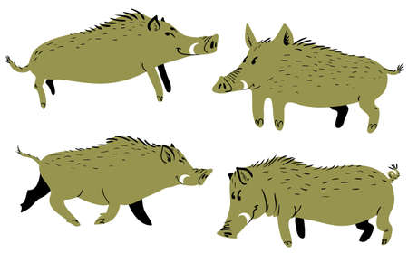 Set with cute boars. Vector illustration with wild pigs. Forest inhabitant in cartoon flat style Illustration