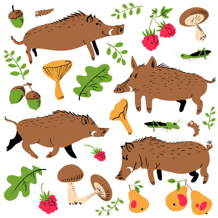 Set with cute boars and forest environmental plants and fruits. Vector illustration with wild pigs. Forest inhabitant in cartoon flat style Ilustração