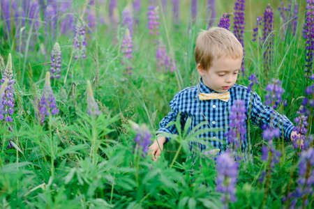 Portrait of handsome smiling and happy caucasian boy with flower, lupine, summer, in backgrounds green grass.  Stock Photo