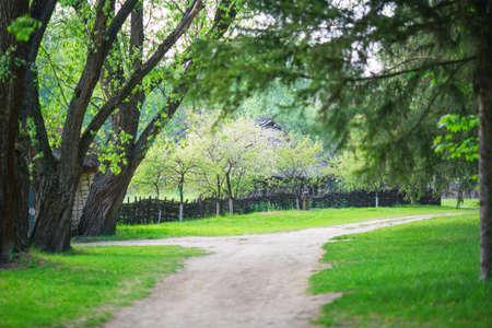 camino en el bosque de verano. costuras Foto de archivo