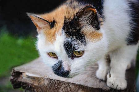 Multi-colored cat hunts Фото со стока - 90515877