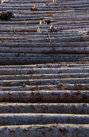 fraser river: logs crossing the river on the pulp and paper mill