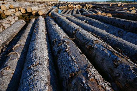 paper mill: logs crossing the river on the pulp and paper mill