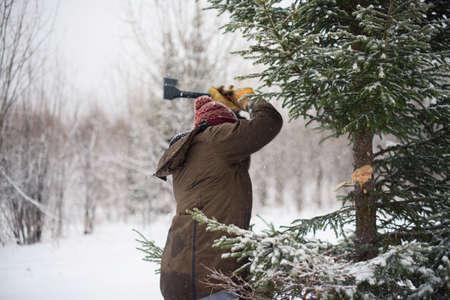 man snijdt de boom in het bos in de winter, buiten de wet, een licentie