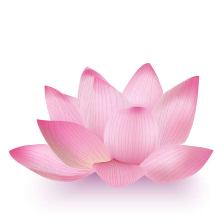 Vector Photo-Realistic Lotus Flower Isolated