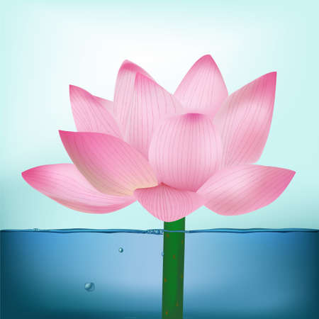 Vector Photo-Realistic Lotus Flower In Water Vector