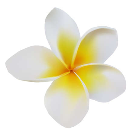 Balinese flower frangipani on isolated white  Illustration