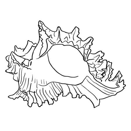 cockleshell: Marine hand drawn shell. Sketch cut-out vector illustration.