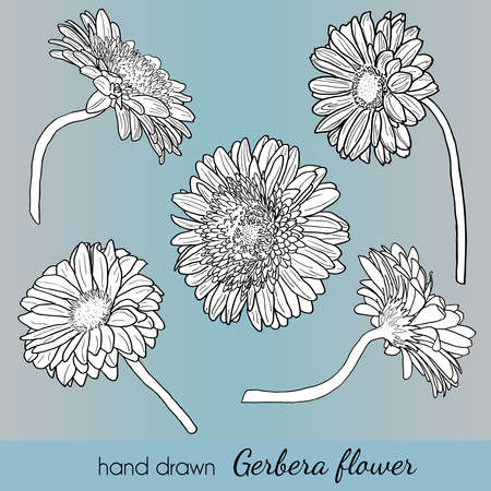 Set of hand drawn vector gerbera flowers. Can use as element design, card, tamplate, invitation, wedding, birthday etc.