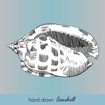 zoology: Hand drawn marine seashell. Vector illustration for travel card, template, zoology, print etc.