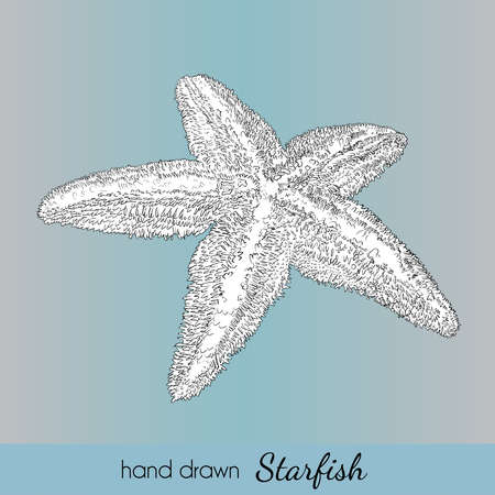 zoology: Hand drawn starfish. Vector illustration for travel card, template, zoology, print etc.