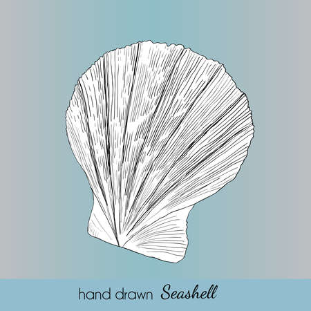Hand drawn marine seashell. Vector illustration for travel card, template, zoology, print etc.