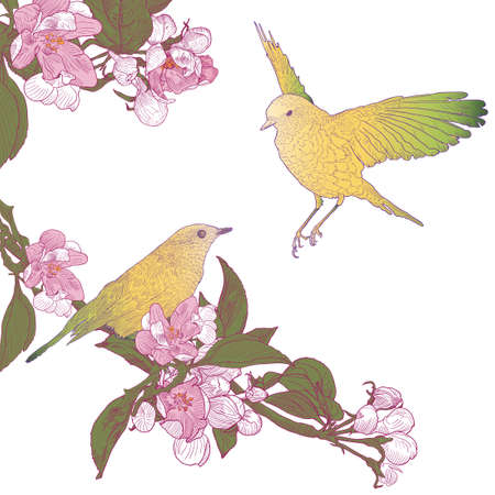 Twigs of Blooming Apple Tree and Two Birds Sitting on Twigs.  Colorful Vintage Vector illustration. Hand drawn botanical style.