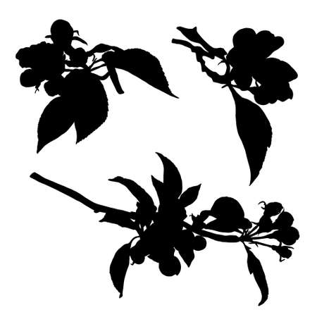 Collection of blossom aplle flowers silhouette. Vector isolated illustration with outline and fill on white background.