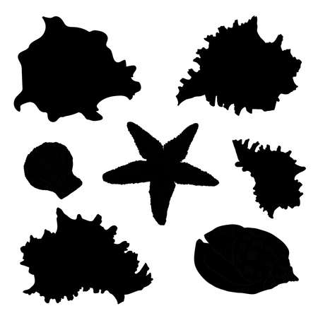 seafish: Collection of seafish and seashells  silhouette. Vector isolated illustration with outline on white background. Illustration