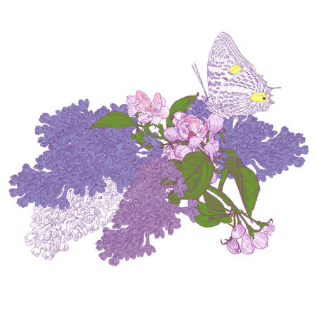 Big Butterfly Sitting Down on Blooming Lilac and Apple Tree Twigs. Colorful Vector Illustration. Hand drawn botanical style.