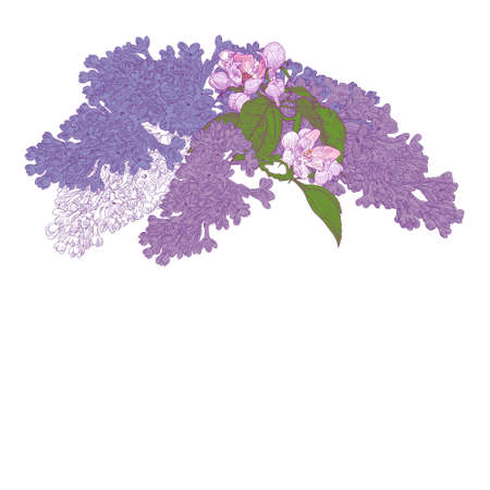 Greeting Card with Blooming Lilac and Apple Tree Twigs. Colorful Vector Illustration with copy place text.  Hand drawn botanical style. Illustration