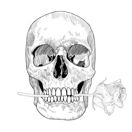 Skull holding rose in the mouth. Vector hand drawn illustration for Day of the Death.