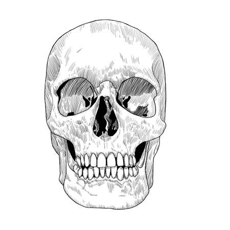 Hand Drawn Skull Sketch. Vector illustration for Day of the Death.