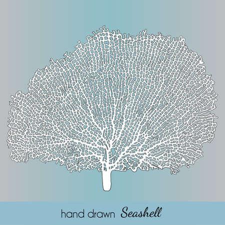 Hand drawn seashell. Pacifigorgia elegant. Vector illustration for travel card, template, zoology, print etc.