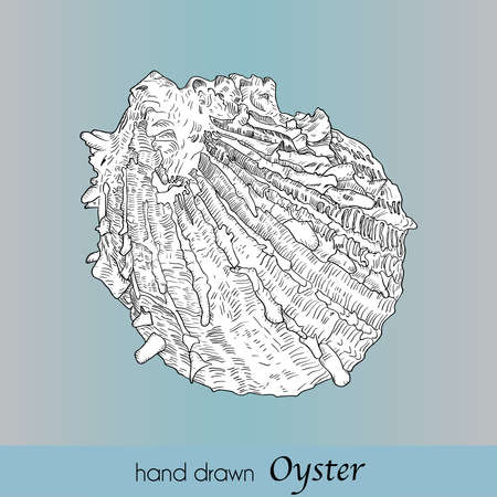 Hand drawn oyster with outline and fill. Sea food. Vector illusrtation in vintage technique. Blue background.