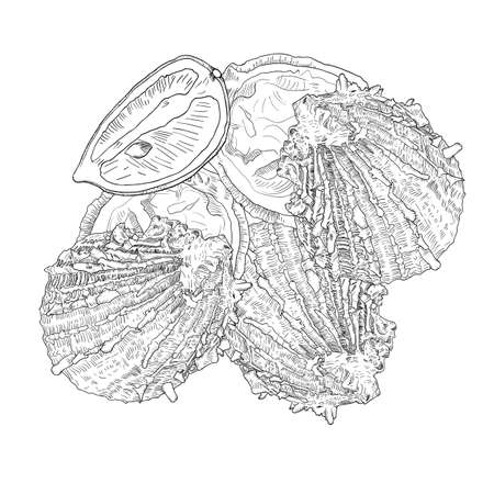 Sea food - oysters with lemon. Hand drawn vector illustration with fill and outline.