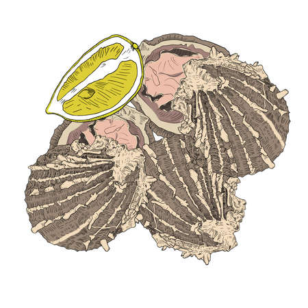 Sea food - opened oysters with lemon. Hand drawn colorful vector illustration with fill and outline.
