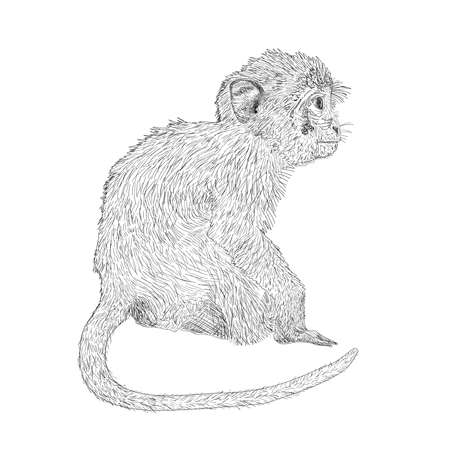 Hand drawn sitting monkey. Sketch style vector illustration. Chinese zodiac sign.