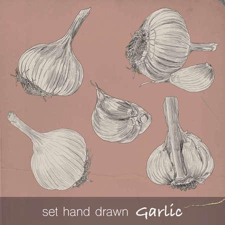 spachteln: Hand gezeichnet Satz von Knoblauch. Sechs isolierte Vektor-Illustration mit F�llung und Kontur auf Vintage-Hintergrund