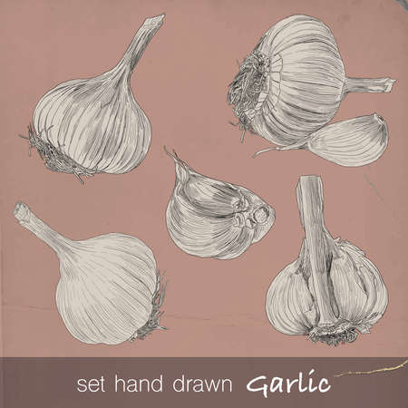 Hand drawn set of garlic. Six isolated vector illustration with fill and outline on vintage background