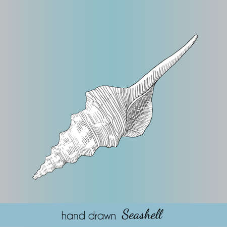 Hand drawn vector seashell in nautical style. Marine illustration for travel card, template, zoology, print etc. Illustration