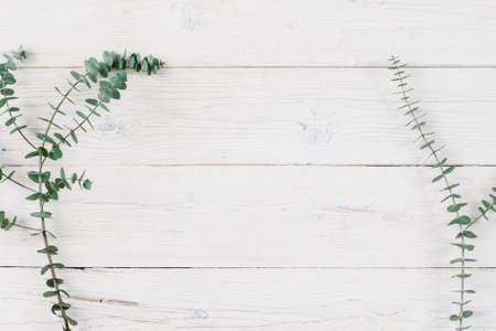 木材の背景に春の植物。空き領域を持つ木製白地の装飾的な植物分岐平面図です。フラットで素朴な背景には、緑の植物が横たわっていた。