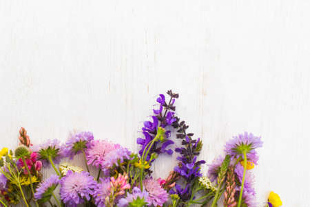 free space: Colorful field flowers on white background, copyspace. Variety of wildflowers on light backdrop with free space for advertisement or text Stock Photo