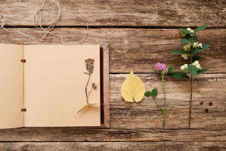 floristic: Drying up plants in scrapbook, flat lay. Top view on vintage album with herbarium samples, free space, old wooden background. Art, hobby, floristic, craft, science, creativity concept