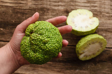 hedgeapple: Woman showing green tropical fruit flat lay. Top view on female hand holding full osage orange, two cut halves of Adams apple on wooden table. Exotic, alternative medicine, pharmacology concept