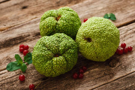 hedgeapple: Green osage orange with viburnum berries on wood. Top view on three Adams apples on wood flat lay with red berries and leaves. Exotic, tropical, alternative medicine concept