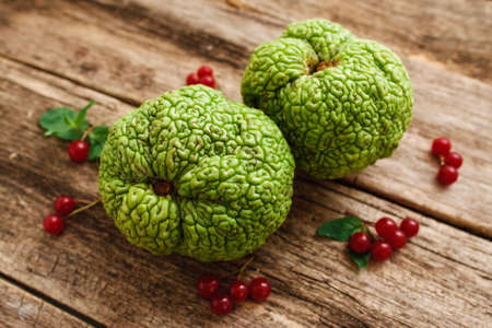 hedgeapple: Top view on green exotic fruits with red berries. Osage apples or Maclura pomifera with viburnum and leaves on old grungy wooden table, bright sumer composition Stock Photo