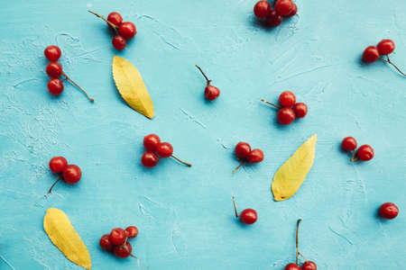 Mellow viburnum berries and leaves on the blue background. Delights of the fall. Game of contrasts.