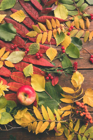 Juicy autumn harvest and leaves on the wood surface. Fall background.