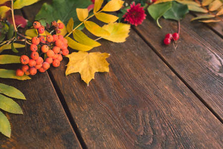 fall autumn leaves mix on rustic wooden background