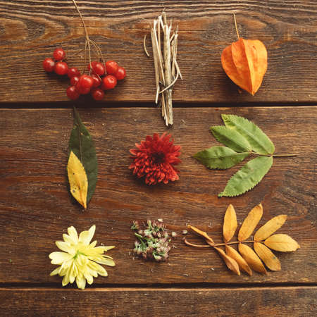 fall autumn leaves and plants mix on rustic wooden background Banco de Imagens