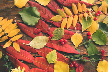 Autumn leaves and berries mix. abstract fall background Banco de Imagens