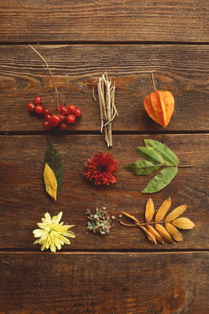 Autumn plants composition on the rough wooden background. Delights of the fall. Beauty of the order.