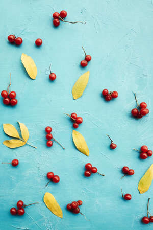 abstract autumn berry and leaves on blue background concept