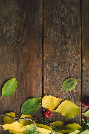 Autumn leaves on the rough wooden surface. Colourful fall background.