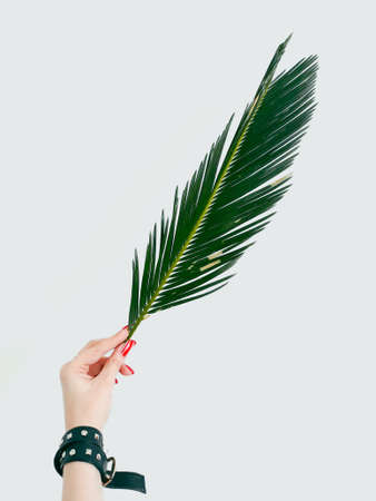 woman hand holding a fern leaf on white background. decorative natural plant. green bracken branch. botany and flora. free space concept